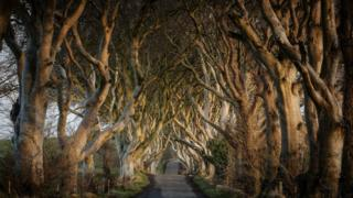 Dark Hedges from Game of Thrones