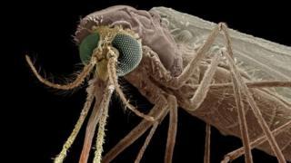 Shirika la Afya duniani inasema watu 4000,000 wafariki sababu ya ugonjwa wa malaria kila mwaka