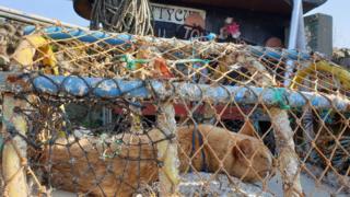 Cat in a lobster pot in Pettycur Bay