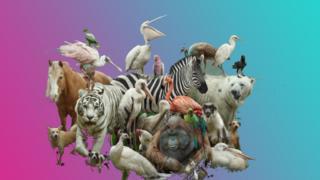zoo-animals.
