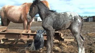 Horse cruelty