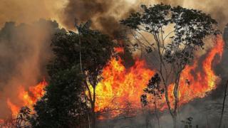 अॅमेझॉनच्या जंगलात आग