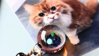 骨灰玻璃珠裏的寵物記憶