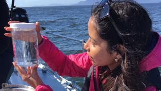 Laura Leiva observando muestras del agua marina en busca de microplásticos