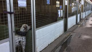 Dog in kennels
