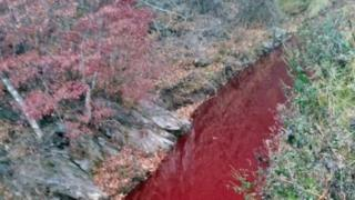 The river having turned red after the pigs were killed