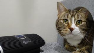 Kittens Cat with speaker