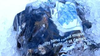 Bag of Conwy mussels