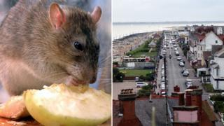 Rat (left), Sea Road, Felixstowe (right)