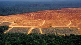 Clarão de desmatamento em meio à floresta