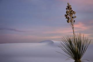 Yucca at Dusk - Lesley Chalmers / www.igpoty.com