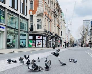 Pigeons on Oxford Street