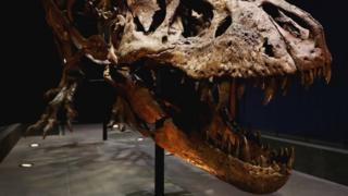Череп тираннозавра