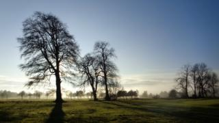 Misty morning with trees