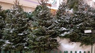 Christmas trees in grotto