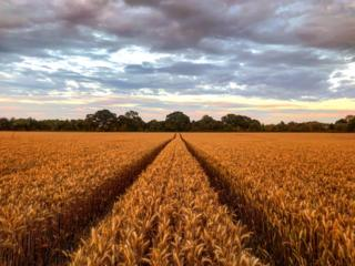 It's almost harvest time for Oxfordshire's fields