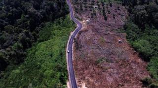 Jalanan membuka akses untuk deforestasi.