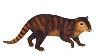 Artist's impression of Kimbetopsalis simmonsae (c) Sarah Shelley