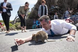 A politician tries to get a selfie with a quokka.