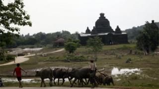 Local residents walk with buffalos near a pagoda in Myauk U, Rakhine State, western Myanmar, Tuesday, Aug 4, 2015.