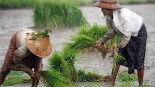 လယ်သမားတွေရဲ့မြေသိမ်းခံရမှု၊ မြေယာပိုင်ဆိုင်မှုပြဿနာအများအပြားရှိနေ