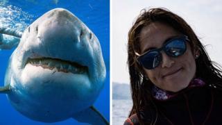À esquerda, o tubarão-branco; à direita, fotografia de Kimberly Jeffries fora da água