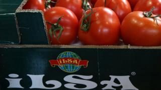 турецкие помидоры