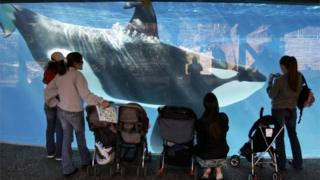 People watch through glass as a killer whale swims by in a display tank at SeaWorld in San Diego on 30 Novembre 2006