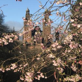 blossoms in Glasgow's Kelvingrove Park