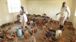 Brethren School owners have turned classrooms into chicken houses