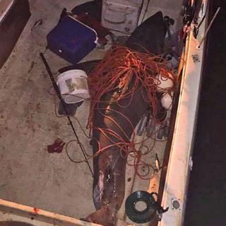 акула завдовжки застрибнула в човен
