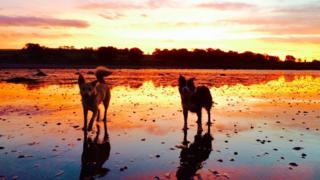 Tara and Maisie enjoying the sunrise at Ardmore Point, Helensburgh.