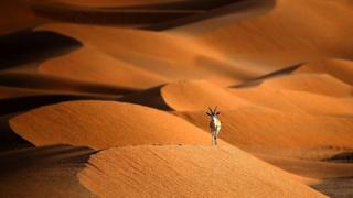 environment Arabian oryx
