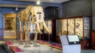 Skeleton of an elephant