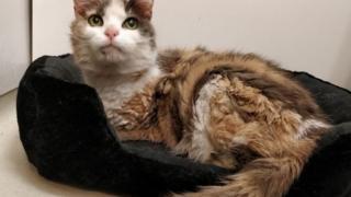 'Lolipop' adlı kedi