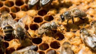 ตัวอย่างน้ำผึ้งถึง 3 ใน 4 จากทั่วโลก มีสารฆ่าแมลงที่เป็นอันตรายต่อผึ้ง