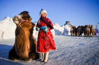A Mongolian girl poses for photo with a camel.