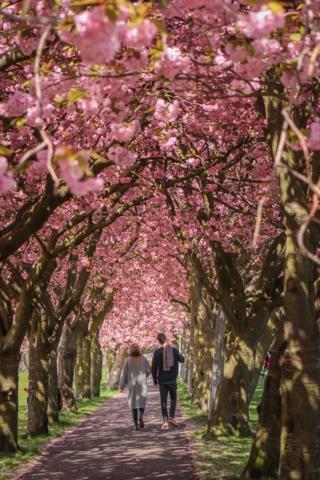 Couple under blossom