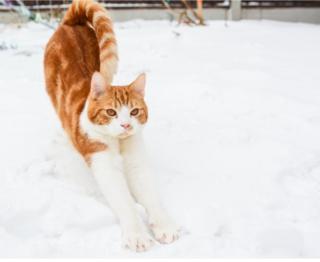 кот по имени Родни, Эссекс