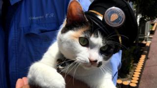 """Йонтама (""""Тама четвертая"""") - самая младшая из кошек черепахового окраса, служащая начальником станции на железной дороге Вакаямы"""