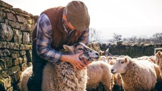 Фермер с овечкой