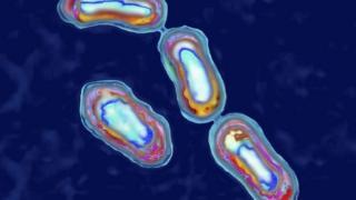 Bactéria Yersinia pestis vista em microscópio