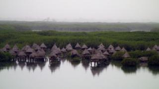 A mangrove plantation