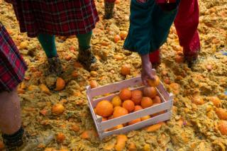 Over 700 tons of oranges are used during the battle