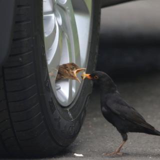 Bird in wheel
