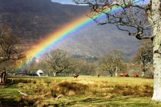 A rainbow over a field of Highland cows in Applecross