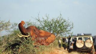 Elephant protection debate to dominate conservation meeting