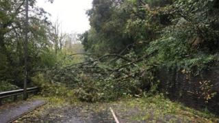 Glynneath road blocked after tree falls in landslide