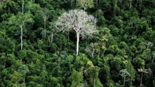 Amazon ormanından bir görünüm