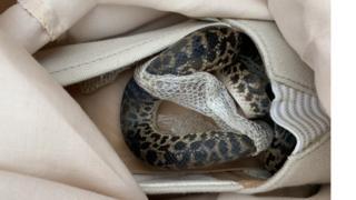 Snake in a shoe